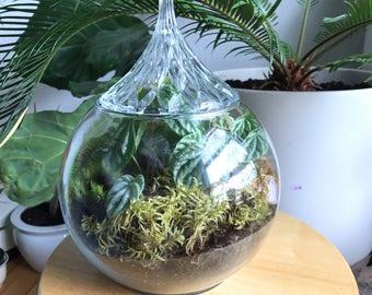 Crystallized terrarium