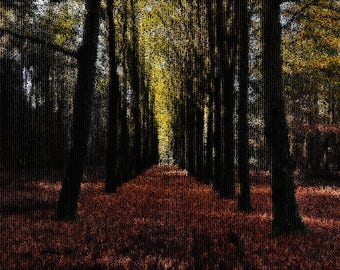 Forest Photography Textured Background Instant Download