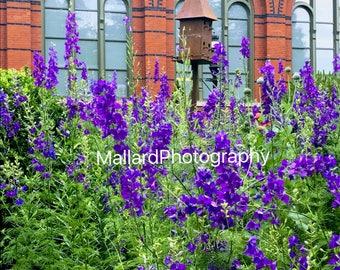 Vibrant Purple Flowers