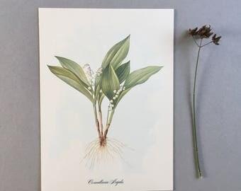 Botanical Vintage Print, Herbarium Print, Plant Print, Botanical Poster Chart, Herb Print, Plant Art, Plant Illustration Botanical Plant Art