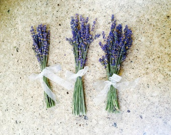 Beautiful & Fragrant - Lavender Minies