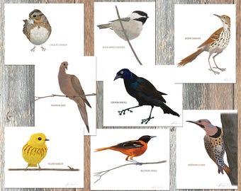 Notecards --Brad's Backyard Birds, Collection #2