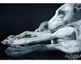 Whippet A4 Fine Art Print