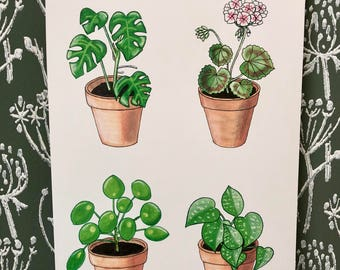Poster plants in terracotta