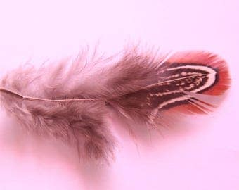 pretty multicolored feathers between 5-7 cm set of 10