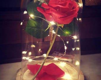 bright dark pink rose under glass