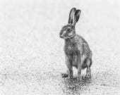 Hare on the Road Blank Gr...