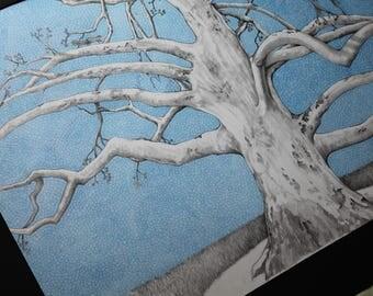Lone Sycamore Tree