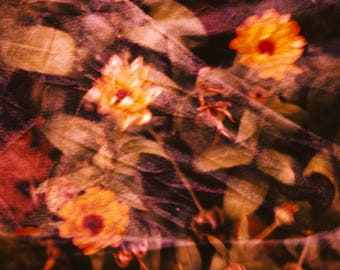 Fine Art Photography Giclee Print