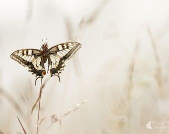 "Original Art ""Dream"" - butterfly, butterfly, photo, macro photography"