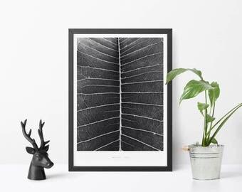 Iquitos Botanical Exotic Leaf Scandinavian Design Wall Art Poster