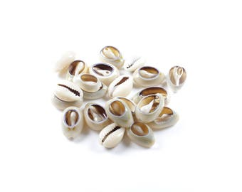 30 shells natural cowrie cut (+/-13 ~ 16mm x 10 ~ 11mm x 3 ~ 5mm)
