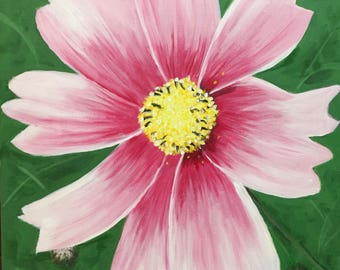 Pink Cosmos