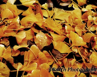 Artistic Photograph-- Leaves