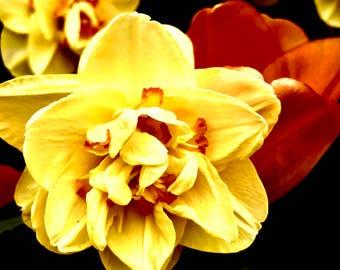 Yellow Flower Matte Canvas Print
