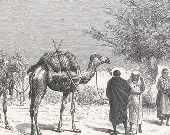 Somalia 1885, Caravan coming to draw water, near Ouarman, Old Antique Vintage Engraving Art Print, Man, Woman, Tree, Crop, Animal, Camel