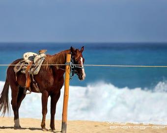 Cabo Beach Horse 2, Landscape Photography, Home Decor, Wall Art, Gift, Cabo San Lucas
