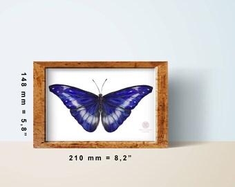 Немецкий порнофильм про коллекционера бабочек