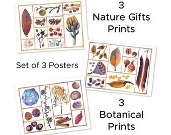 Nature Gifts Set, 3 Poster, Botanical Set, 3 Botanical Print, Nature Art Print, Nature Wall Art, Botanical Wall Art, Plants Print, Herbarium