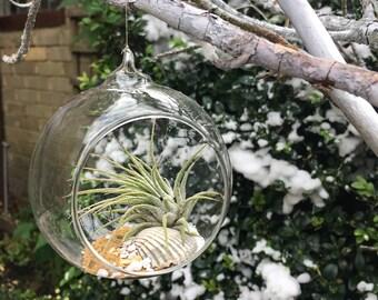 Hanging Live Air Plant Terrarium Kit,  Tillandsia Glass DIY Planter