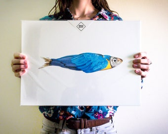 Sardine Parrot, Colors, Poster, Wall, Portugal, Animal, Photography, Art, Digital