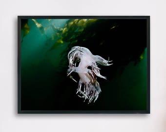 Nudibranch Seaslug, Underwater Photography Printable Poster, Minimalist Fine Art, Digital Download