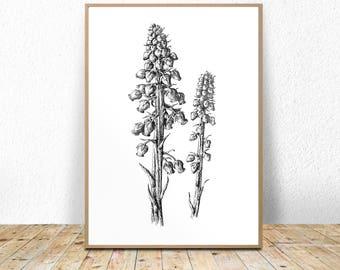 Modern Botanical Art Print, Botanical Printable, scandi print, contemporary print, nordic print, botanical illustration,minimalist botanical