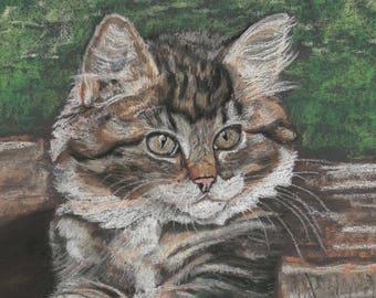 Cat Print - Cat Wall Art - Cat Gift - Tabby Cat - Cat Picture - Animal Painting - Animal Print - Kitten Wall Art - Kitten Gift - Kitten Art
