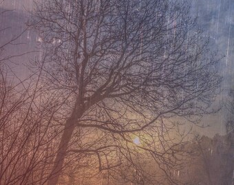 A Tree at Sunrise