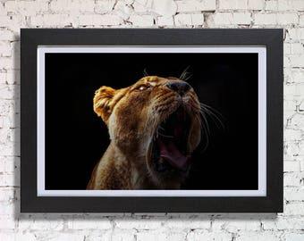 Lion Roar, Framed Print