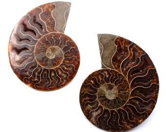 Pair of Ammonite - Fossil polished - Madagascar - 390 g