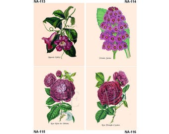 NA113-116 Artistic Ephemera Nature Print - Choose 8x10 or 5x7 - Purple Flowers Bignonia Linlleyi, Primula, Rose Reine des Violettes