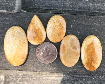 Lot of 5 Fossil Coral, Cabochon Gemstones