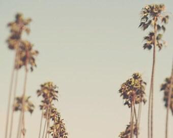 SALE palm trees photo, California art, tropical, Los Angeles home decor, LA print, blue, green, nursery wall art, LA photography, Myan Soffi