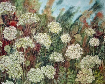 Queen Ann's Lace an original watercolor