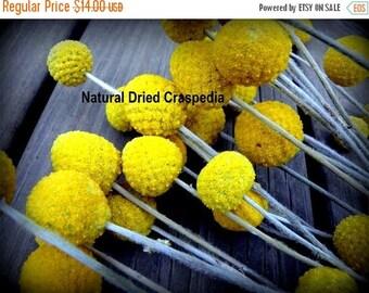 Save 15% Craspedia 12 short stem -Billy Balls-Billy Buttons-Dried Yellow Wedding Flowers-Bundle of 12