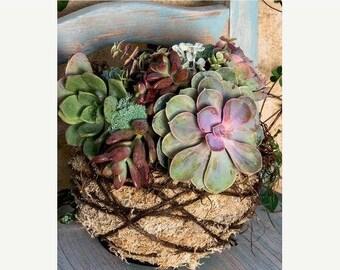 Save25% Succulent Kokedama DIY Kit-Orchid Kokedama kit-Hens and chicks-sedums-succulents