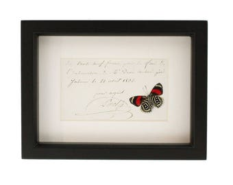 Antique Handwriting Framed Butterfly Display