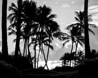 Hawaiian Fine Art Canvas wrap- Poipu Beach Kauai, Hawaii- Poipu- Sunrise- Palm Trees- Black and White