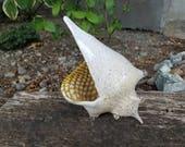 White Sea Shell with Crea...