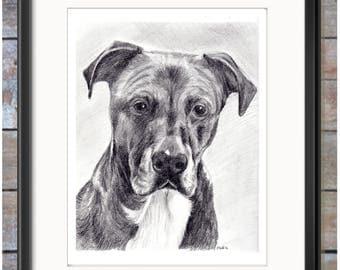 Pet Portrait PRINT, Animal Art, American Staffordshire Terrier
