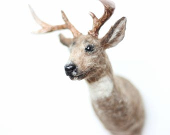 Miniature Deer Taxidermy