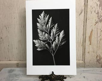 Leaf - fine art photography print