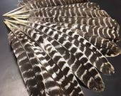 6 x Naturally Shed Turkey WING feathers from our Rare+Heritage breed poultry farm upstate NY