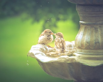 Adorable Bird Photography,kissing sparrows,love,birds in fountain,art for baby's nursery,matte print,gift for bird lovers,nature,woodland