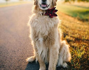 Classic Buffalo Check Plaid Girl Dog Flower Bow Tie Dog Collar, Holiday Dog Collar, Bowtie Dog Collar, Red and Black Dog Collar, Fall