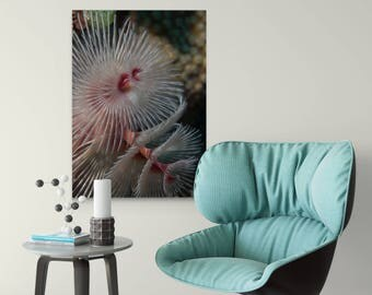 Underwater Christmas Tree Worm | Underwater Photo Canvas Wrap | Wall Art | Home Decor | Scuba Diver Gift | Marine Art