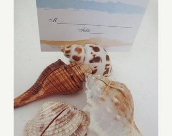 30% OFF SALE Seashell Place Card Holders Genuine Shells Assortment (35) Coastal Décor Entertaining Set