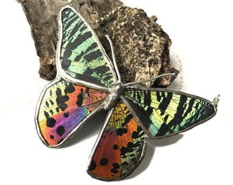 Real Sunset Moth Butterfly Wing Necklace Preserved in Glass