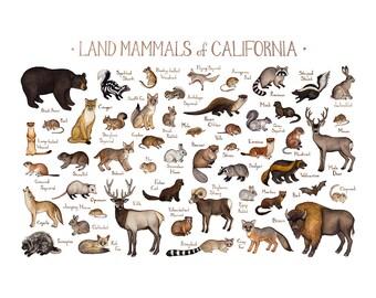 California Land Mammals Field Guide Art Print  / Animals of California / Watercolor Painting / Wall Art / Nature Print / Wildlife Poster